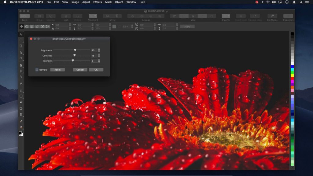 Where can you download CorelDRAW Graphics Suite 2019 full version for Mac OS